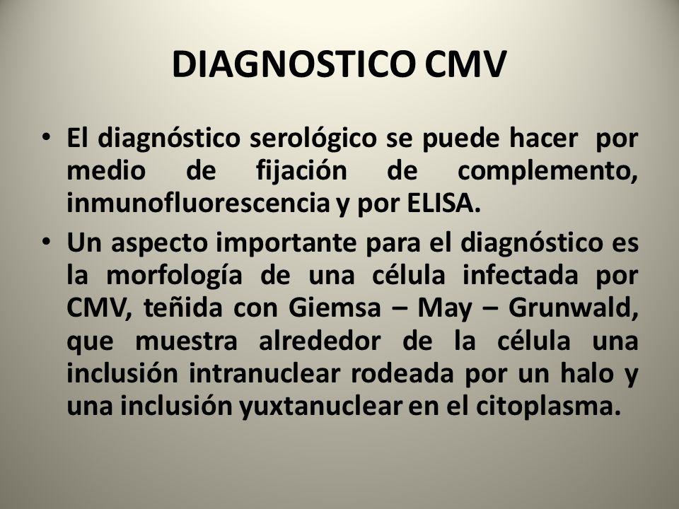 DIAGNOSTICO CMV El diagnóstico serológico se puede hacer por medio de fijación de complemento, inmunofluorescencia y por ELISA.