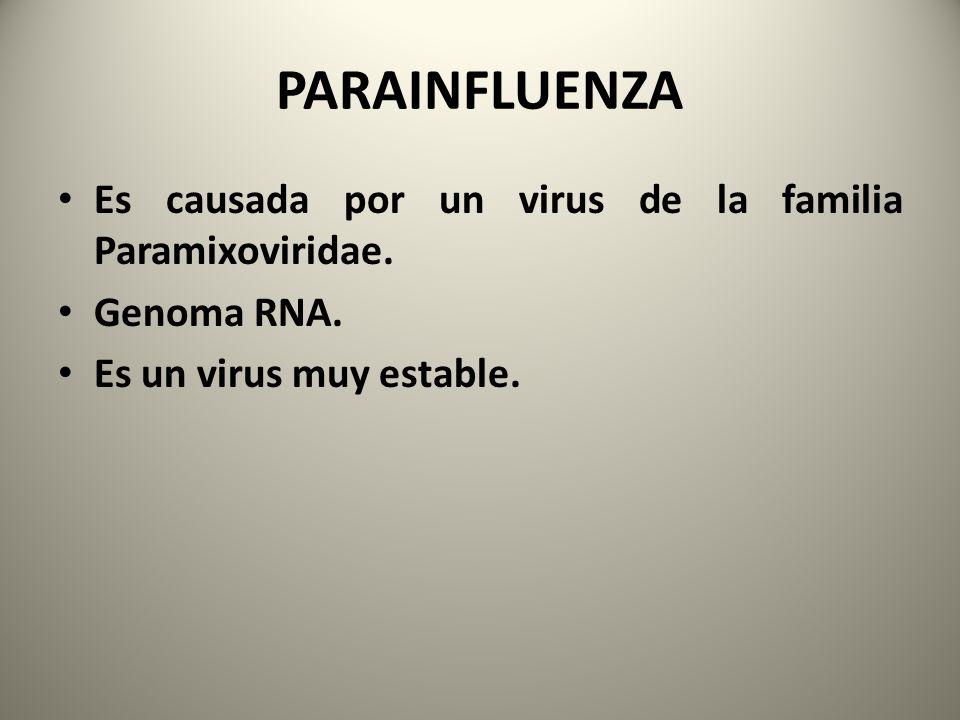 PARAINFLUENZA Es causada por un virus de la familia Paramixoviridae.