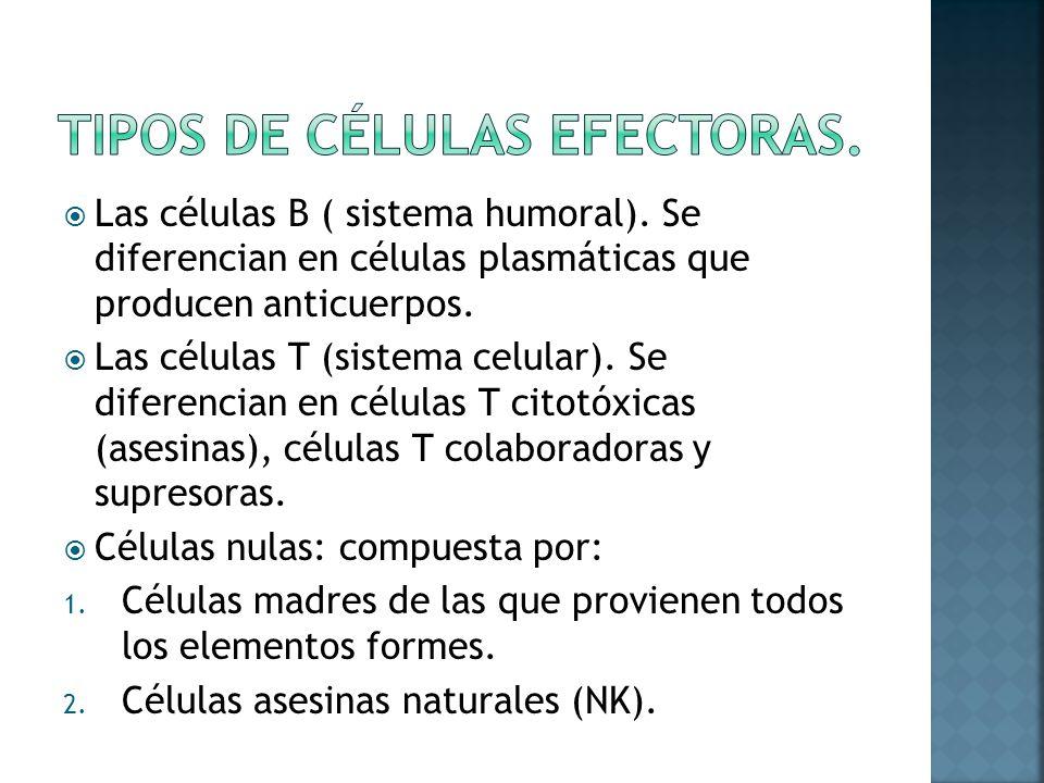 Tipos de células efectoras.