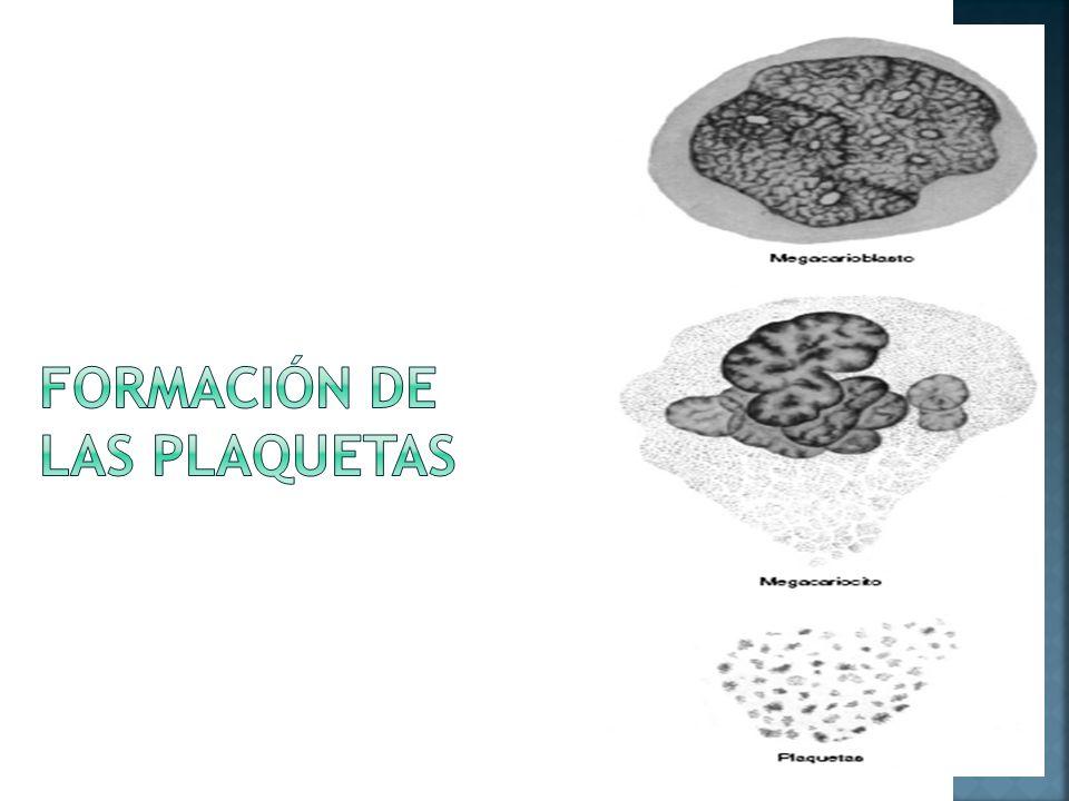 FORMACIÓN DE LAS PLAQUETAS