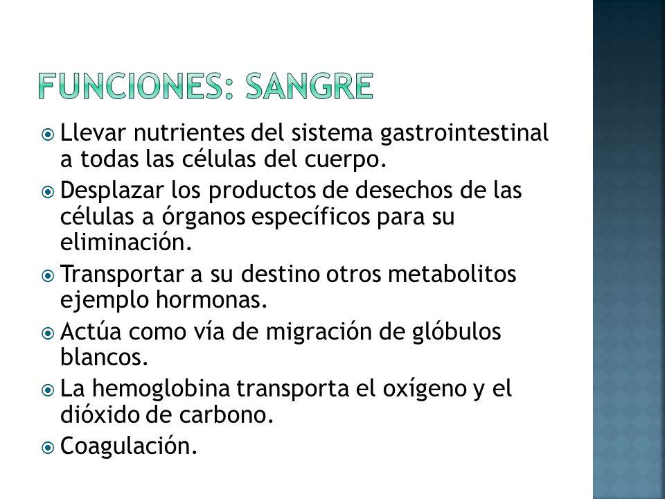 Funciones: sangre Llevar nutrientes del sistema gastrointestinal a todas las células del cuerpo.