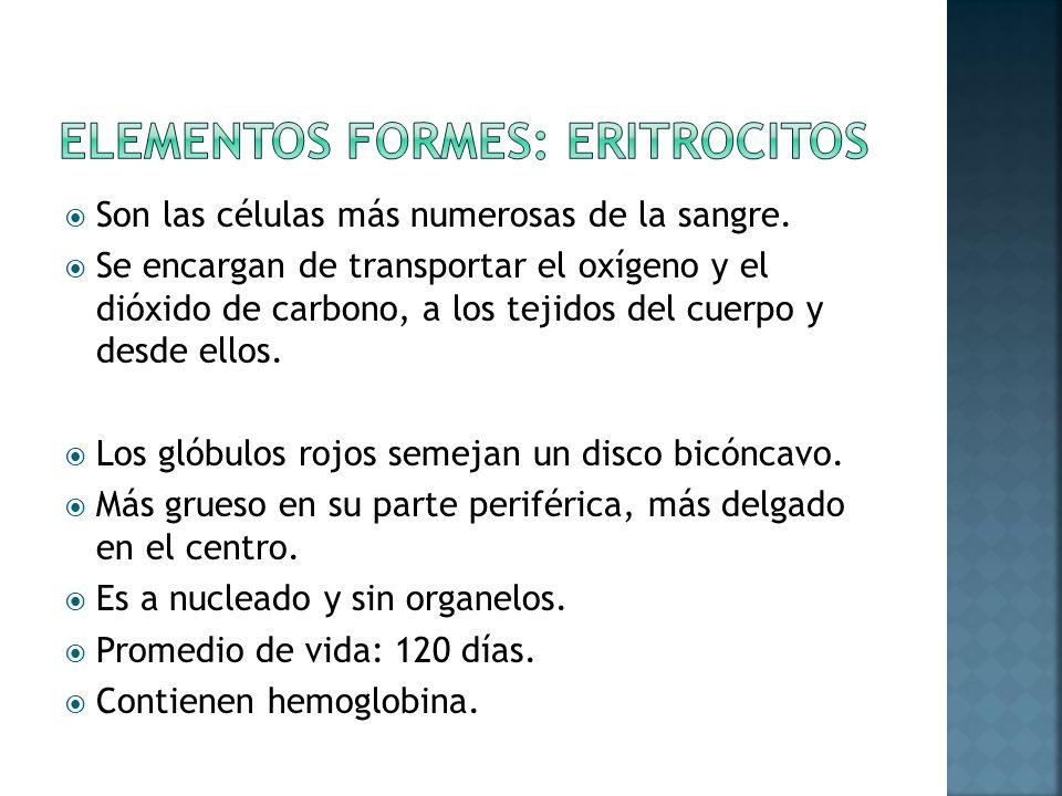 Elementos formes: eritrocitos