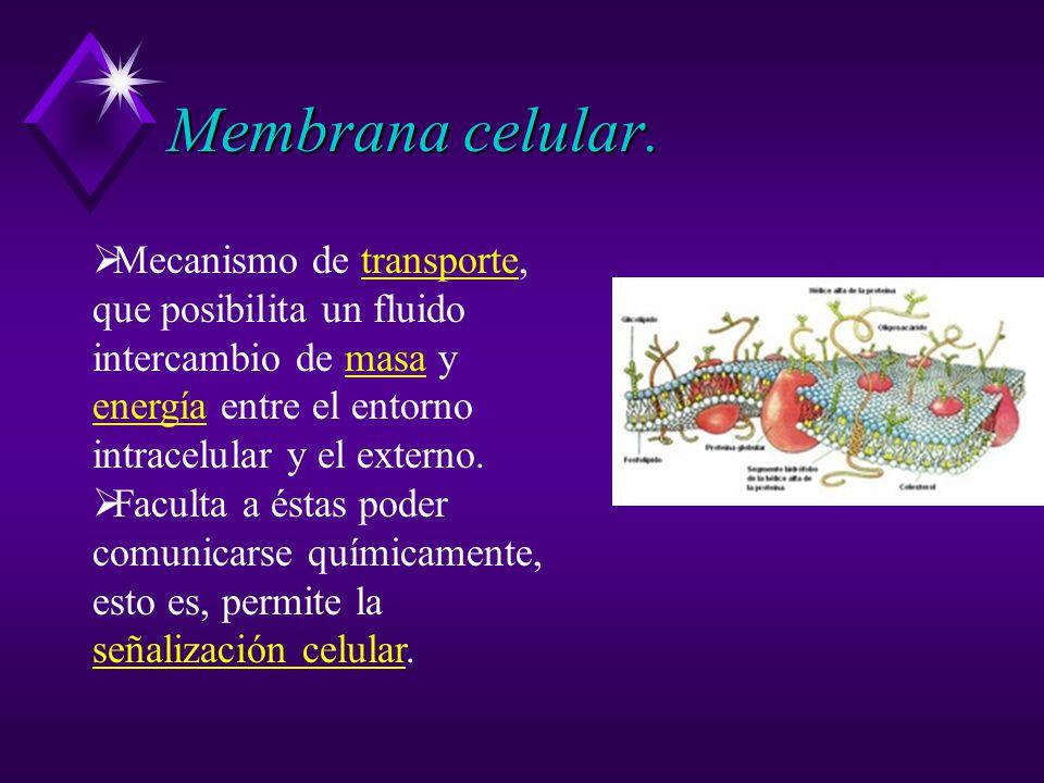 Membrana celular. Mecanismo de transporte, que posibilita un fluido intercambio de masa y energía entre el entorno intracelular y el externo.