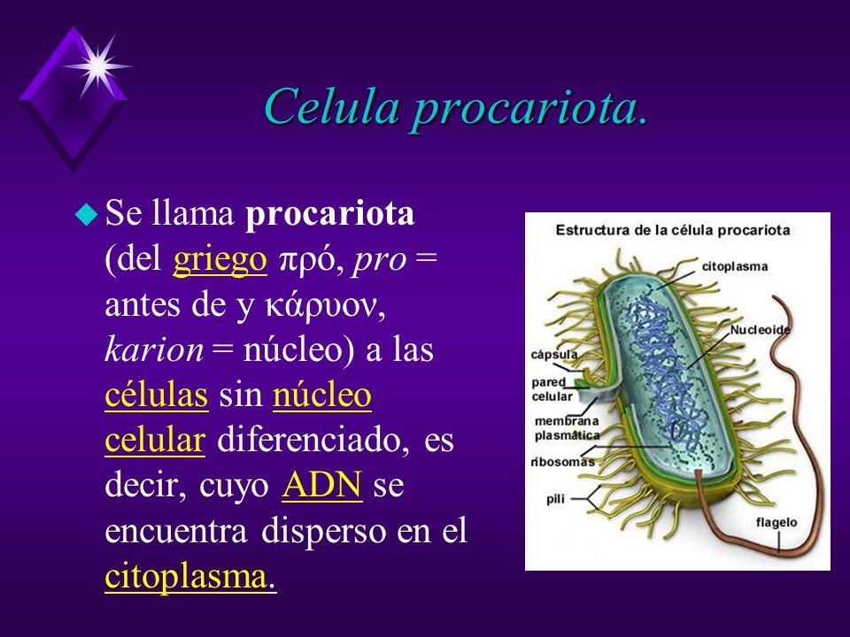 Celula procariota.