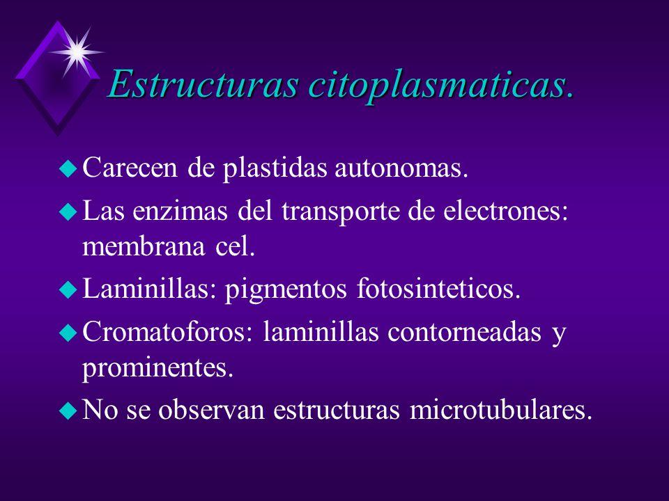 Estructuras citoplasmaticas.