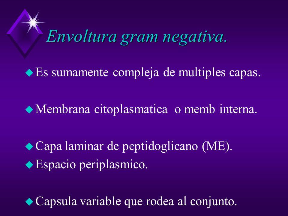 Envoltura gram negativa.