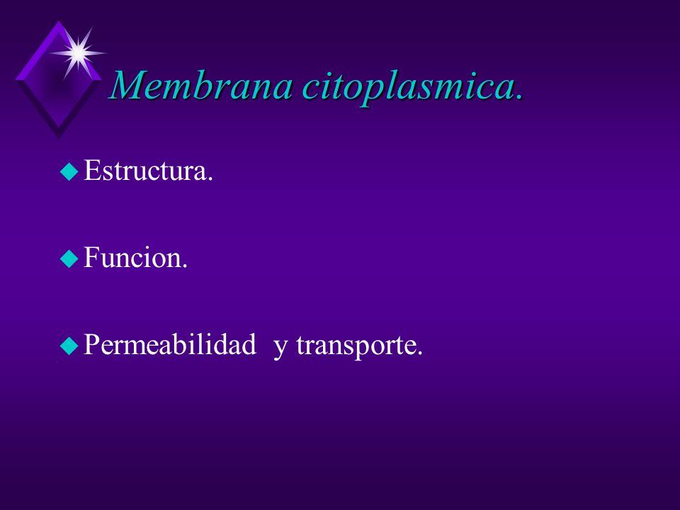 Membrana citoplasmica.