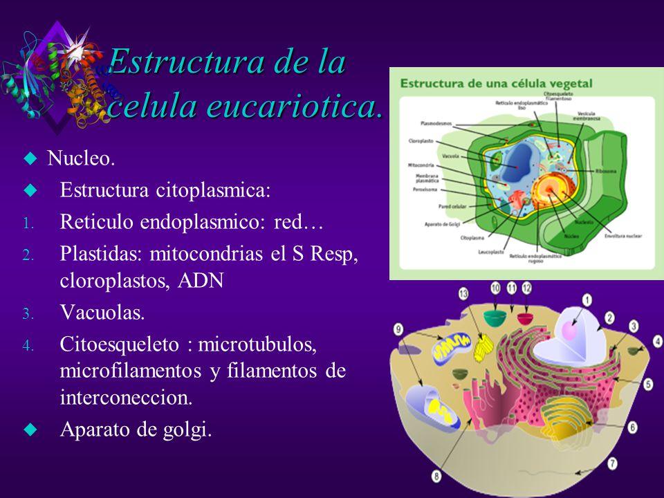 Estructura de la celula eucariotica.