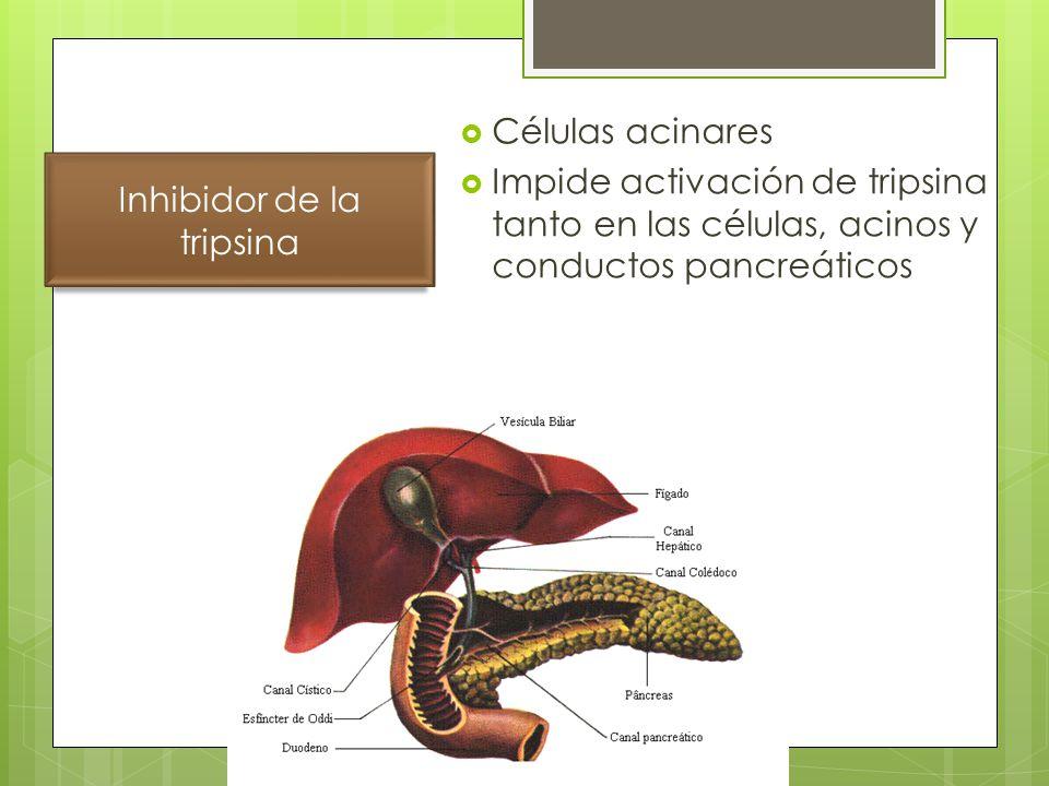 Inhibidor de la tripsina