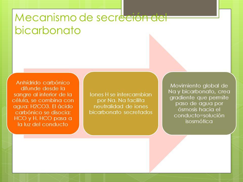 Mecanismo de secreción del bicarbonato