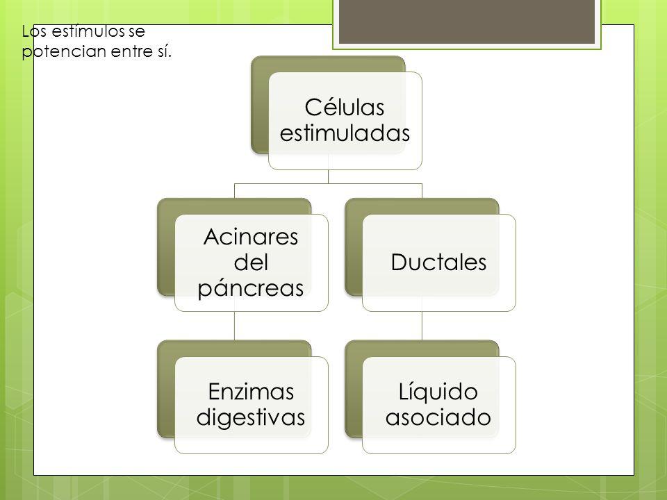 Células estimuladas Acinares del páncreas Enzimas digestivas Ductales