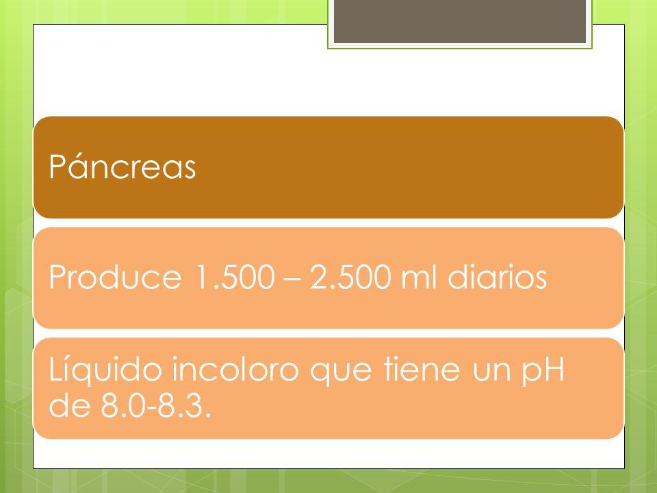 Páncreas Produce 1.500 – 2.500 ml diarios Líquido incoloro que tiene un pH de 8.0-8.3.