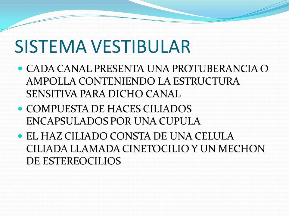 SISTEMA VESTIBULAR CADA CANAL PRESENTA UNA PROTUBERANCIA O AMPOLLA CONTENIENDO LA ESTRUCTURA SENSITIVA PARA DICHO CANAL.