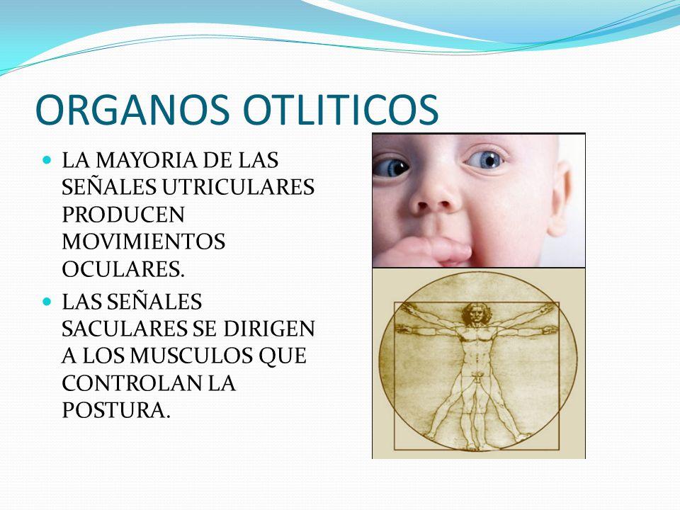 ORGANOS OTLITICOS LA MAYORIA DE LAS SEÑALES UTRICULARES PRODUCEN MOVIMIENTOS OCULARES.