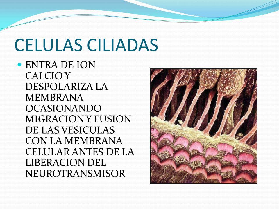CELULAS CILIADAS