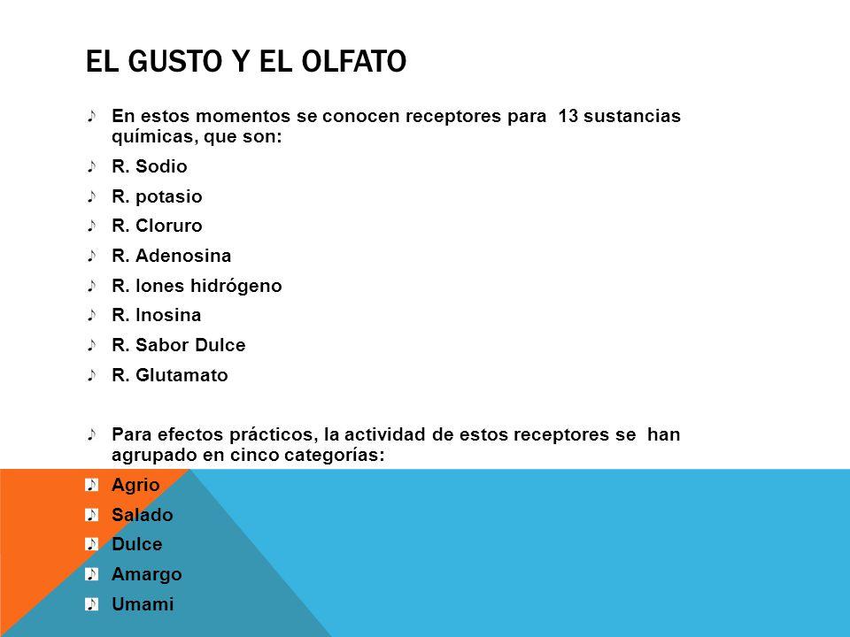 EL GUSTO Y EL OLFATO En estos momentos se conocen receptores para 13 sustancias químicas, que son: