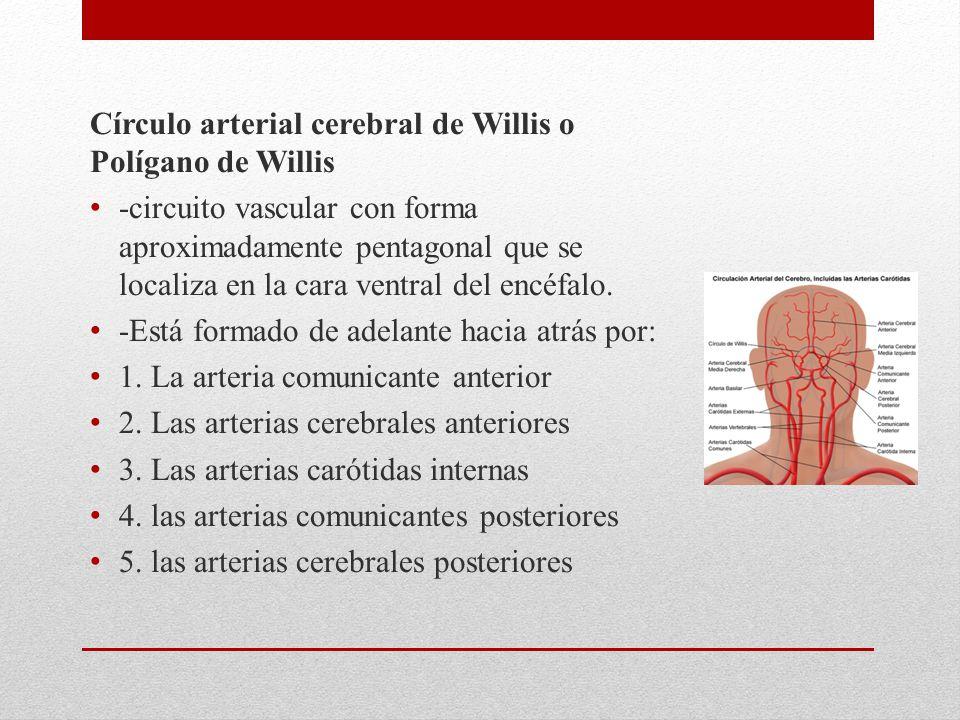 Círculo arterial cerebral de Willis o Polígano de Willis