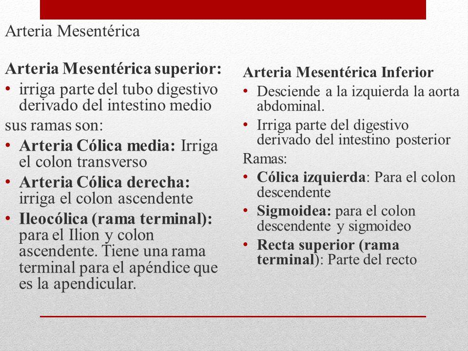 Arteria Mesentérica superior: