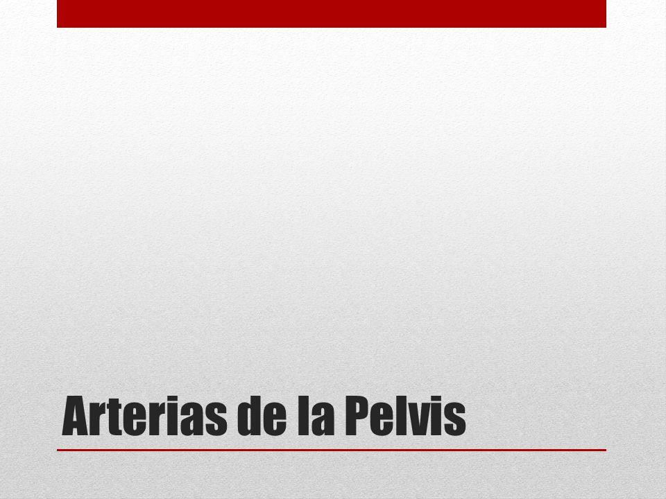 Arterias de la Pelvis