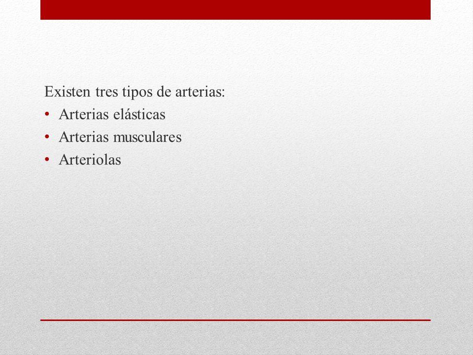 Existen tres tipos de arterias: