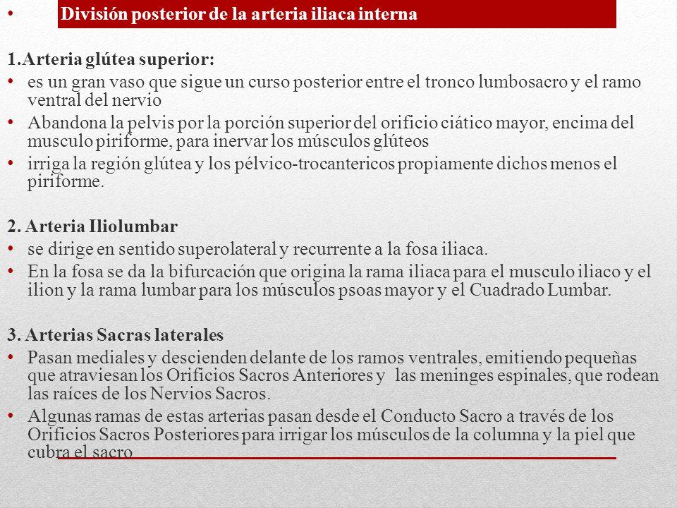 División posterior de la arteria iliaca interna