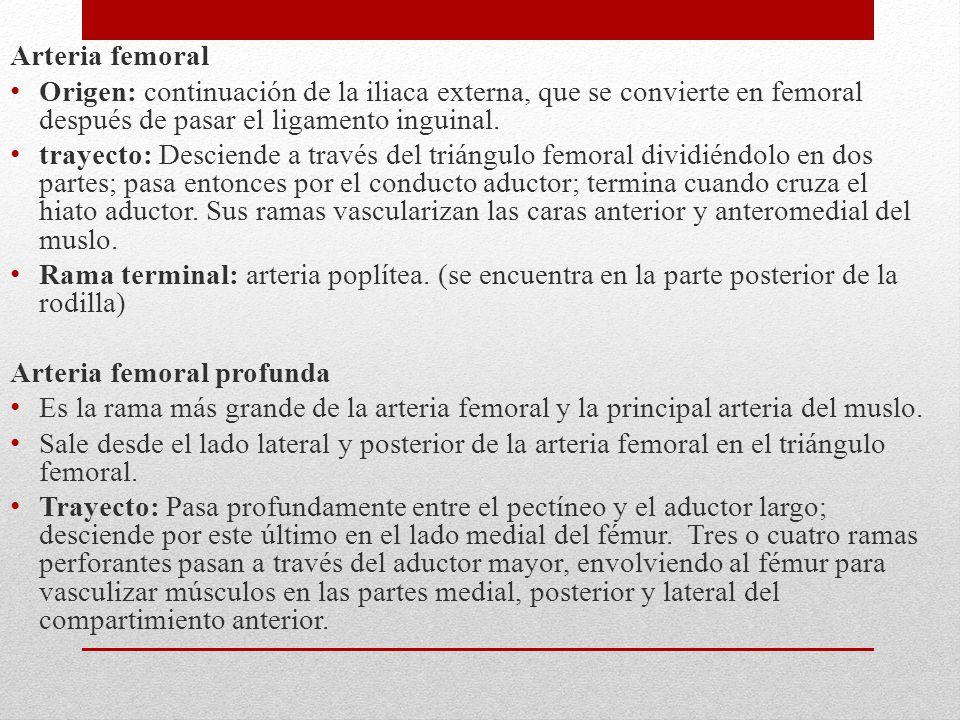 Arteria femoral Origen: continuación de la iliaca externa, que se convierte en femoral después de pasar el ligamento inguinal.