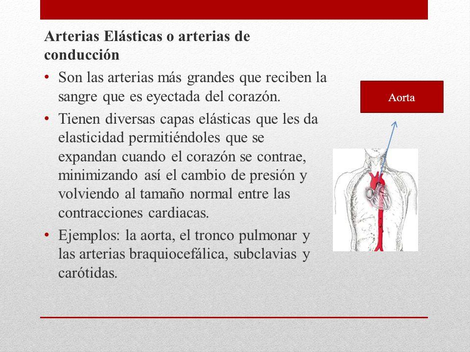 Arterias Elásticas o arterias de conducción