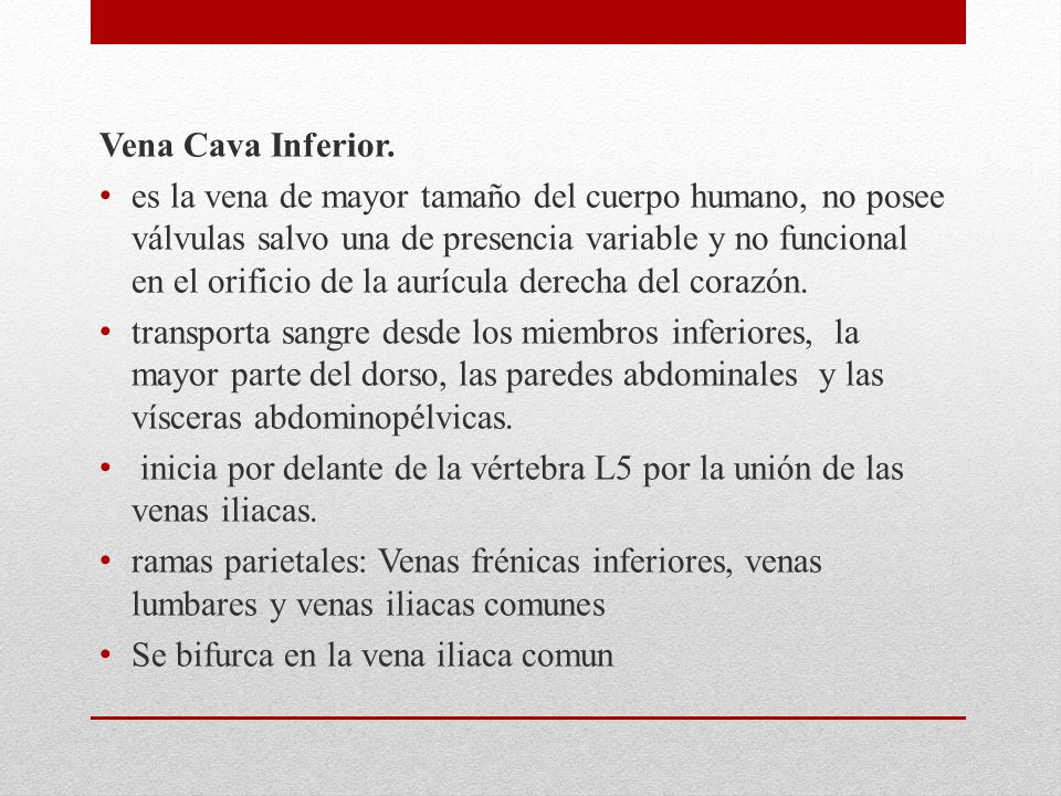 Vena Cava Inferior.