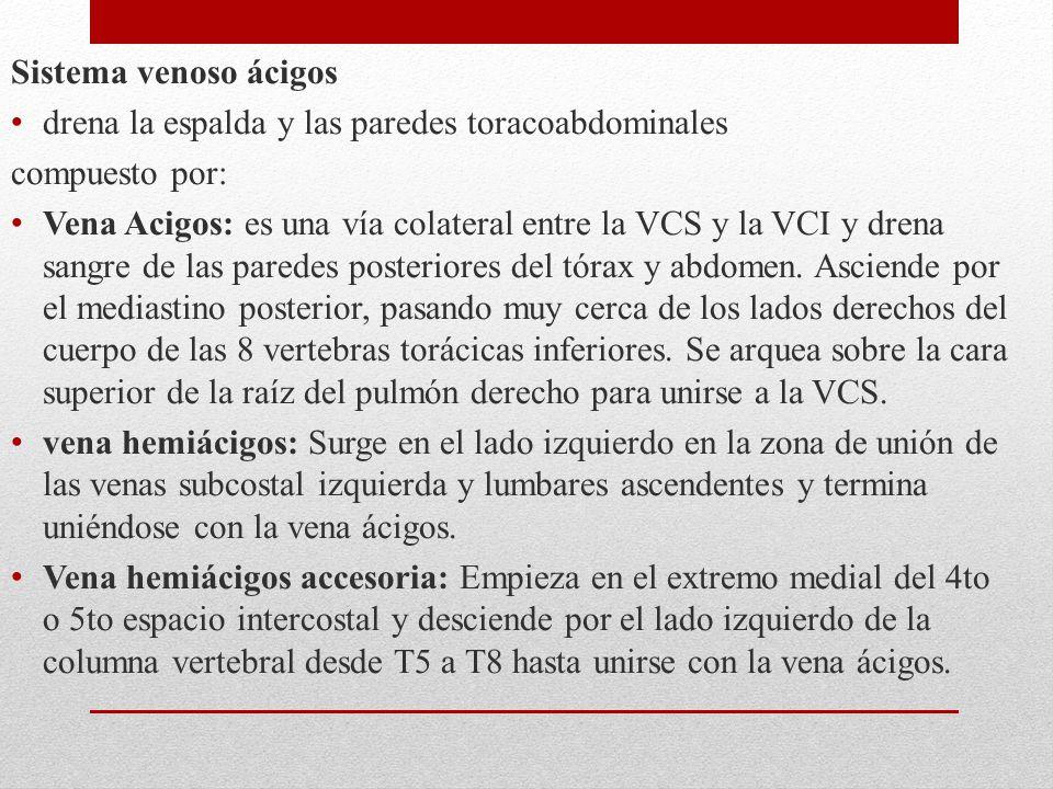 Sistema venoso ácigos drena la espalda y las paredes toracoabdominales. compuesto por:
