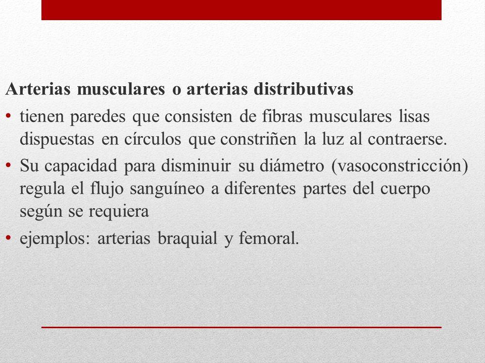 Arterias musculares o arterias distributivas