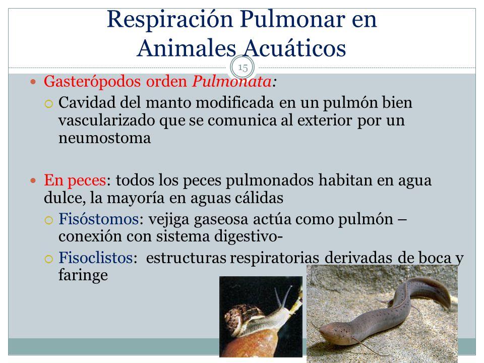 Respiración Pulmonar en Animales Acuáticos