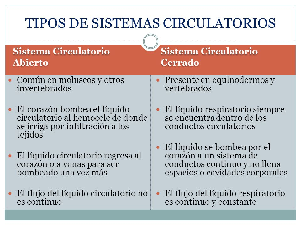 TIPOS DE SISTEMAS CIRCULATORIOS