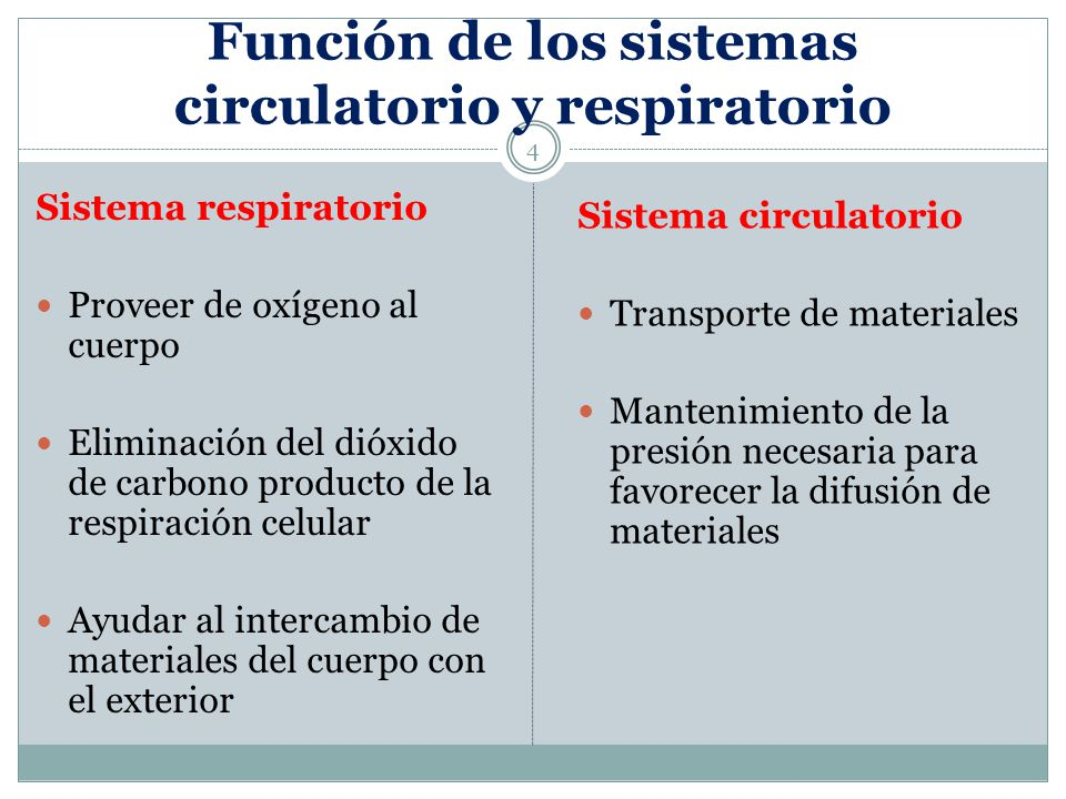 Función de los sistemas circulatorio y respiratorio