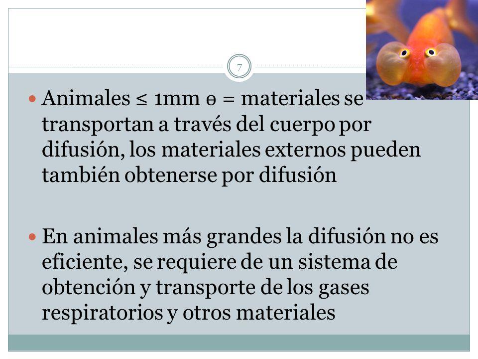 Animales ≤ 1mm ɵ = materiales se transportan a través del cuerpo por difusión, los materiales externos pueden también obtenerse por difusión