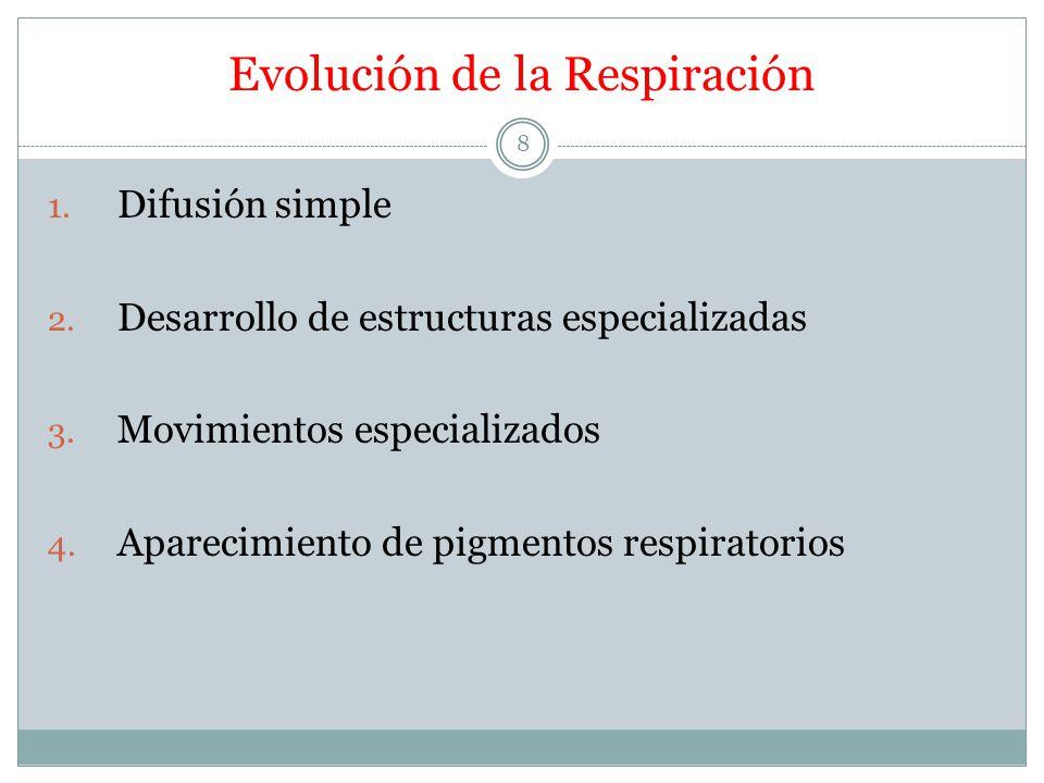 Evolución de la Respiración