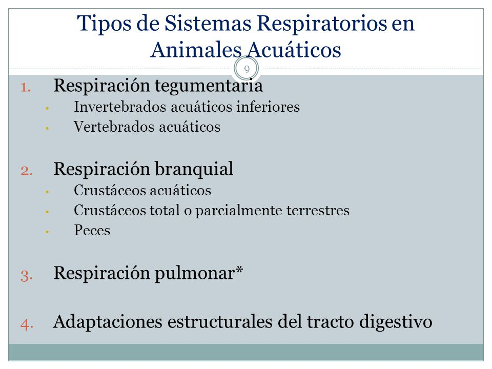 Tipos de Sistemas Respiratorios en Animales Acuáticos