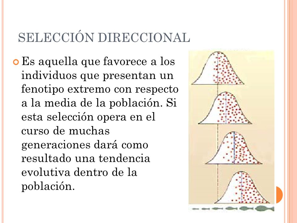 SELECCIÓN DIRECCIONAL