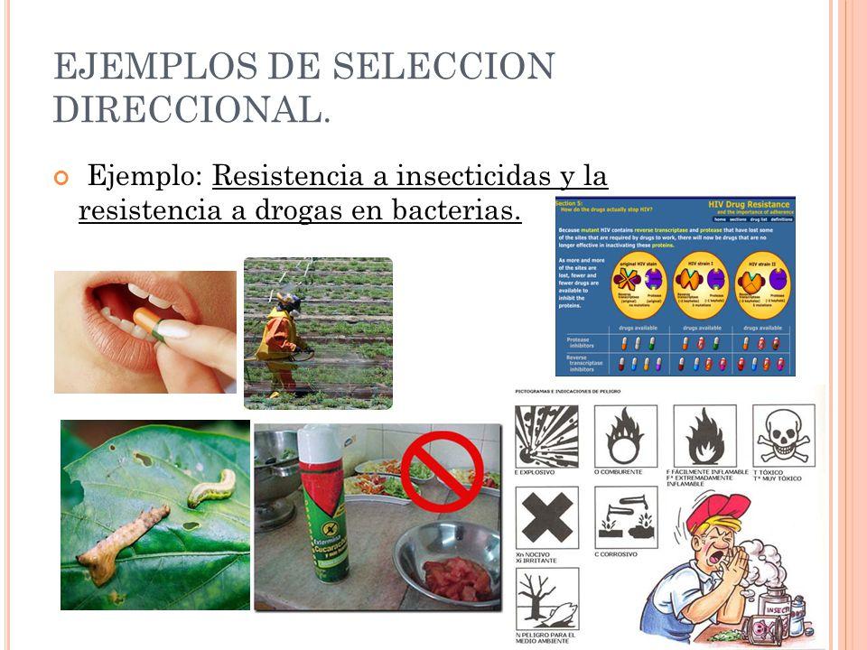 EJEMPLOS DE SELECCION DIRECCIONAL.