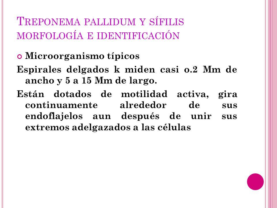 Treponema pallidum y sífilis morfología e identificación
