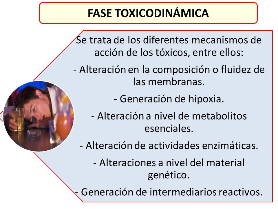 FASE TOXICODINÁMICA Se trata de los diferentes mecanismos de acción de los tóxicos, entre ellos: