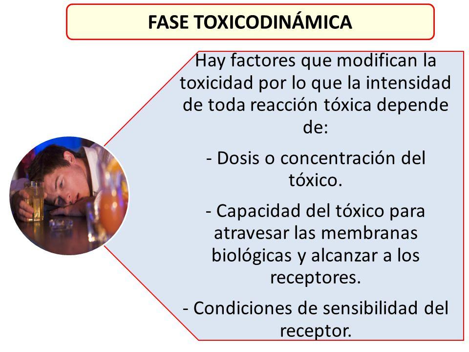 FASE TOXICODINÁMICA Hay factores que modifican la toxicidad por lo que la intensidad de toda reacción tóxica depende de: