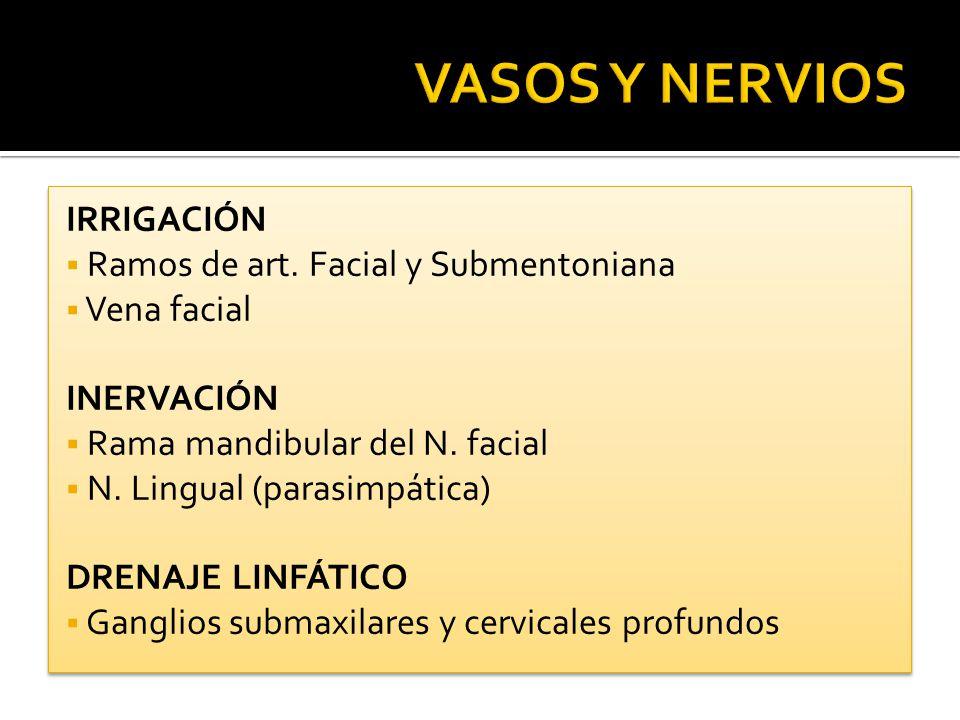 VASOS Y NERVIOS IRRIGACIÓN Ramos de art. Facial y Submentoniana