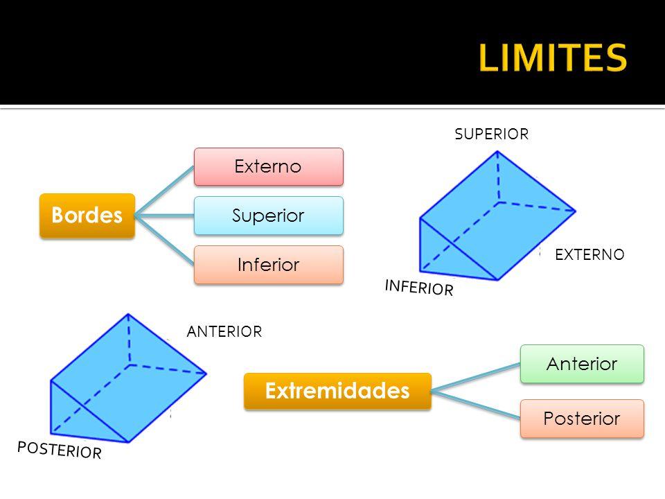 LIMITES Bordes Extremidades Externo Superior Inferior Anterior