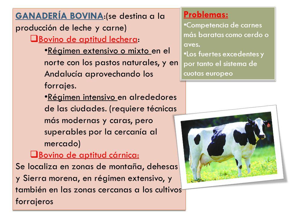 GANADERÍA BOVINA:(se destina a la producción de leche y carne)