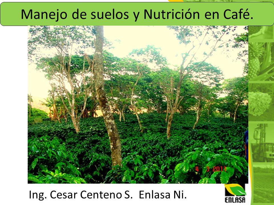 Manejo de suelos y Nutrición en Café.
