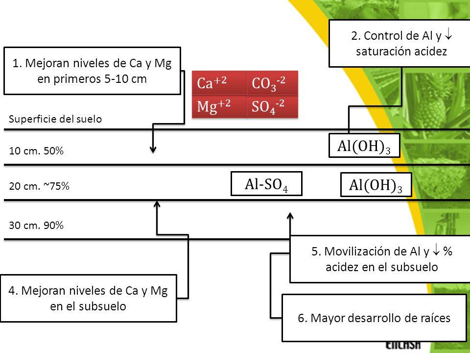 MgCO3 + MgSO4 CaCO3 + CaSO4 Ca+2 CO3-2 Ca2+ Ca2+ OH- OH- Mg2+ Mg2+