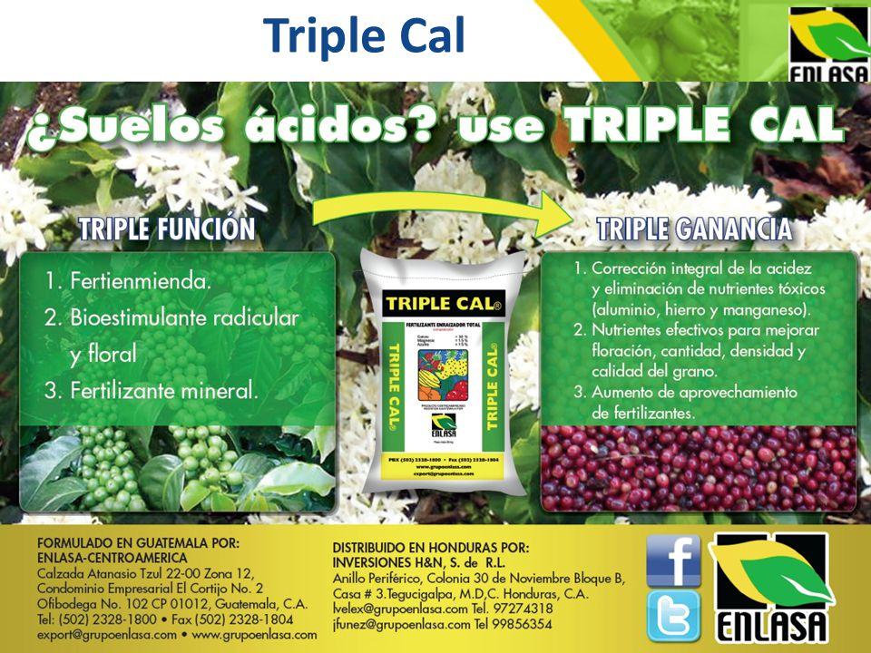 Triple Cal