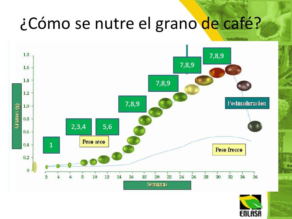 ¿Cómo se nutre el grano de café