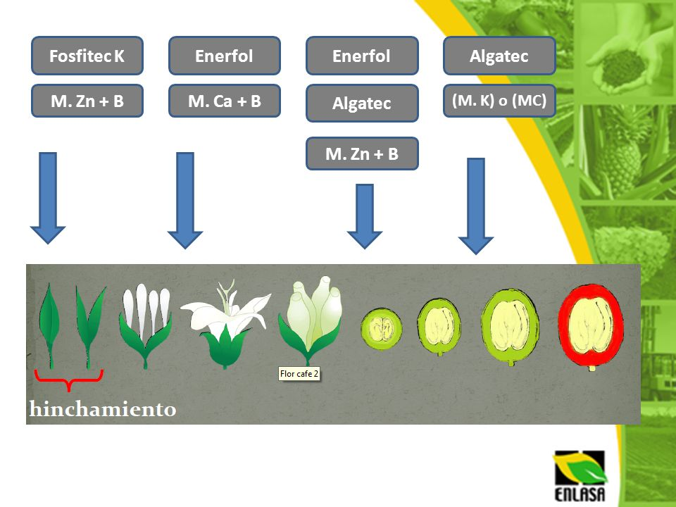 Fosfitec K Enerfol Enerfol Algatec M. Zn + B M. Ca + B Algatec
