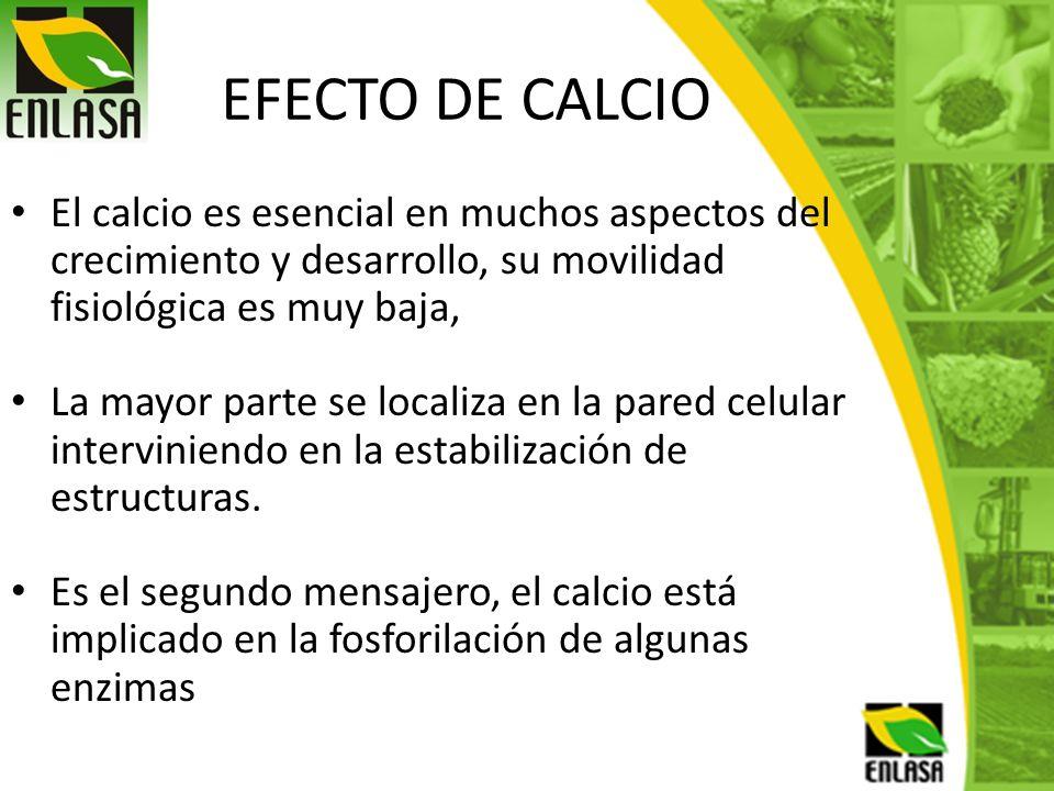 EFECTO DE CALCIO El calcio es esencial en muchos aspectos del crecimiento y desarrollo, su movilidad fisiológica es muy baja,